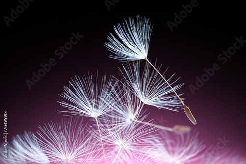 Abstract dandelion seeds