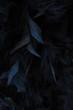 canvas print picture - schwarze Federn