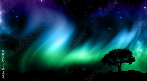Night sky with norther lights with tree silhouettes #70415599