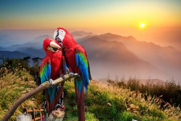 Fototapeta Ptaki The potrait of Blue & Gold Macaw