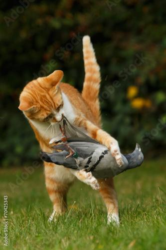 Katze hält Taube Tablou Canvas