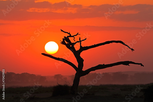 Tuinposter Baksteen Sunset with silhouetted tree, Amboseli National Park
