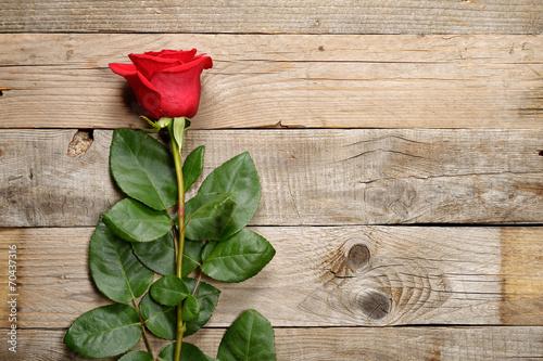 Fototapeta Red rose on old wooden background obraz na płótnie