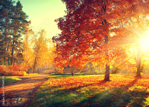 Aluminium Prints Autumn Autumn scene. Fall. Trees and leaves in sun light