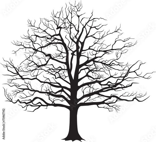 czarna-sylwetka-nagiego-drzewa-ilustracji