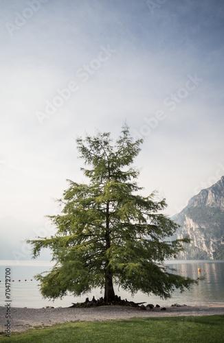 drzewo-nad-jeziorem-garda-we-wloszech