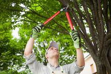 Gardener Pruning A Tree