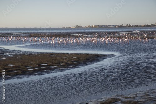 Walvis Bay, Namibia, herons at sunset lagoon