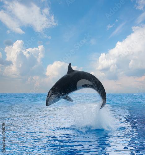 Foto op Plexiglas Dolfijnen jumping killer whale