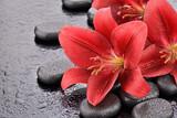 Fototapeta Kamienie - Czerwone lilie na kamieniach bazaltowych