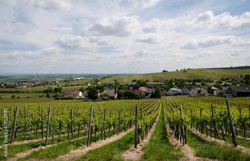 Fotografia  viticulture