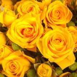 Zbliżenie na żółte róże