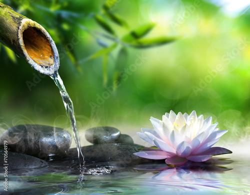 Doppelrollo mit Motiv - zen garden with massage stones and waterlily
