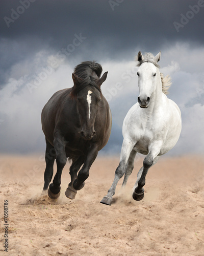 fototapeta na lodówkę Czarne i białe konie Running Wild