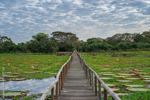 Fotografija  Brazilian Panantal skyline and wooden footbridge