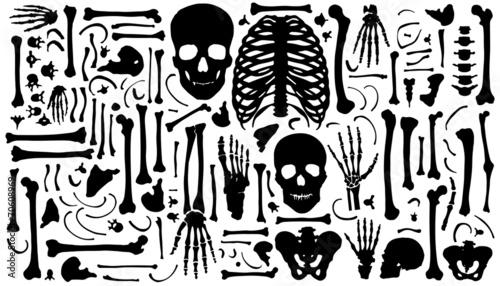 bone silhouettes Canvas Print