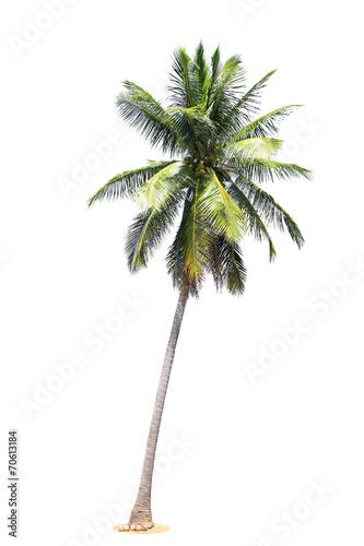 Foto auf AluDibond Palms coconut palm trees isolated on white background