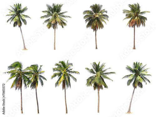 Foto auf Gartenposter Palms Difference of coconut tree isolated on white