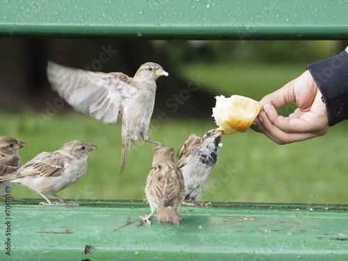 Foto Niño dando de comer a los pájaros en Annecy (Frankreich)