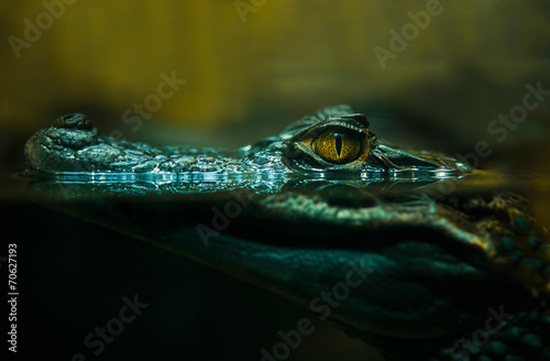 Foto op Canvas Krokodil crocodile alligator close up