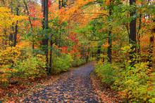 Bike Trail In Autumn Time