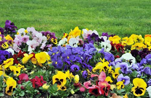 Canvas-taulu Rainbaw flowerbed