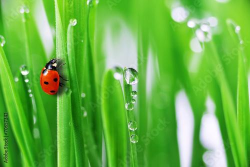 Fototapety do kuchni   green-grass