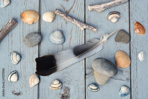 Valokuva  Schelpen en veer op oud geverfd hout