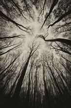 Upward View In A Dark Spooky F...