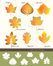 Collection Of Fall Leaves
