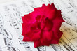 red rose on sheet music, love song concept