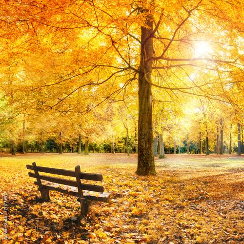 Poster Miel Goldener Herbst im Wald