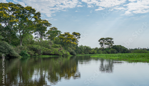 Brazilian Panantal and river Canvas Print