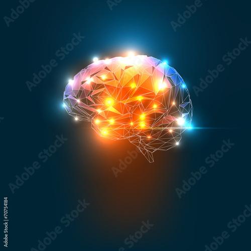 Photo  Human Brain