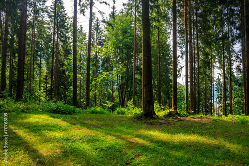 Fototapeten Wald forest glade in shade of the trees