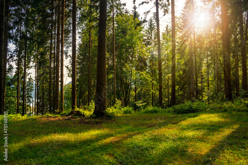 Foto auf Gartenposter Wald forest glade in shade of the trees in sunlight