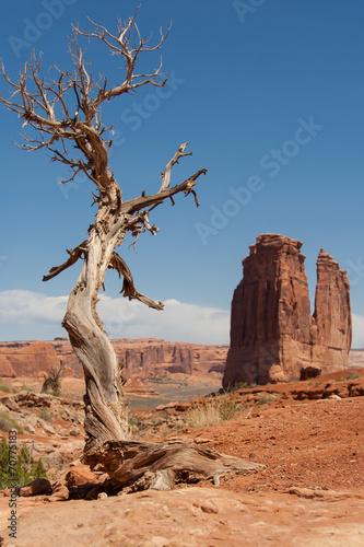 Valokuva  Life in the desert