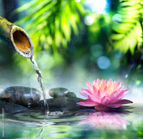 Photo Stands Water lilies zen garden with black stones and pink waterlily
