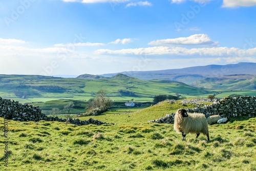 Keuken foto achterwand Schapen Beautiful yorkshire dales landscape stunning scenery england uk