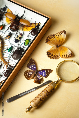 Fényképezés Insects collection