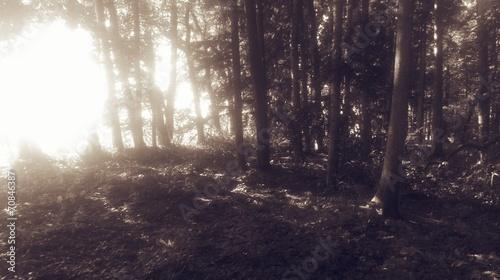 Fototapeten Wald wald