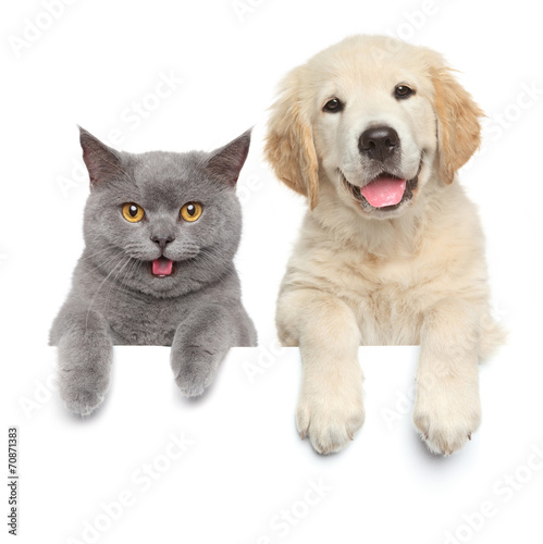 Foto op Plexiglas Hond Cat and dog over white banner