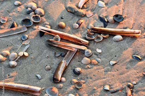 Muscheln am Sandstrand