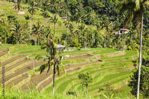 Tuinposter Wijngaard Rice terrace field in Asia