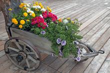 Flowers In Wooden Wheelbarrow On Panel Wooden Floor, Detail From