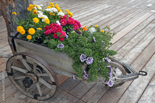 Aluminium Prints Bicycle flowers in wooden wheelbarrow on panel wooden floor, detail from