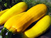Yellow Squashes