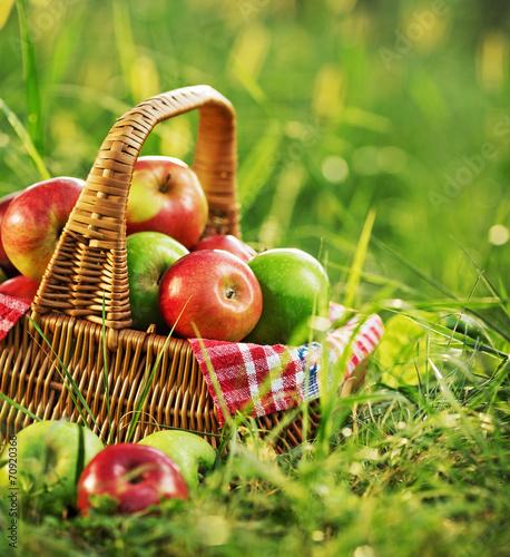 fototapeta na szkło Bogate organiczne jabłka w koszu na zewnątrz. Jesień żniwa