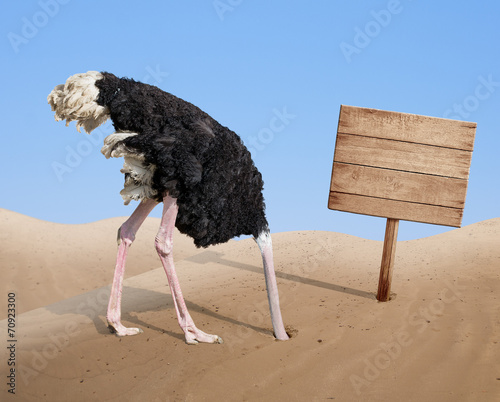 Foto op Canvas Struisvogel scared ostrich burying head in sand near blank wooden signboard