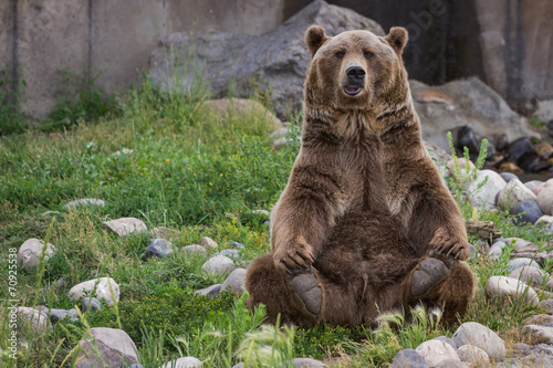 Photo  grizzly bear